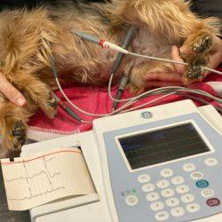 galeria-electrocardiograma (3)