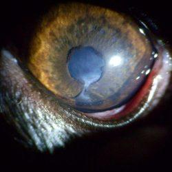 galeria_oftalmología (1)