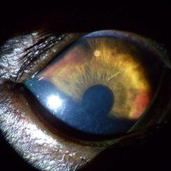 galeria_oftalmología (3)